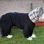 Bearded Collie Isla has dog coats for winter