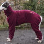 Borzoi Tscherni needs dog coats for large dogs