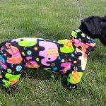 Cesky Terrier Donald's dog bodysuit