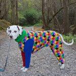 Dalmatian Oakley has dog coats for winter
