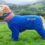 Golden Retirever Tsarmont dog onesies