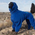 Standard Poodle Nico wears designer dog coats